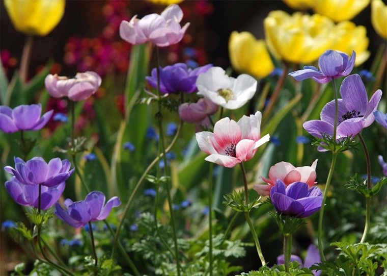 23 Perennial Flowers and Flowering Outdoor Plants for the Garden