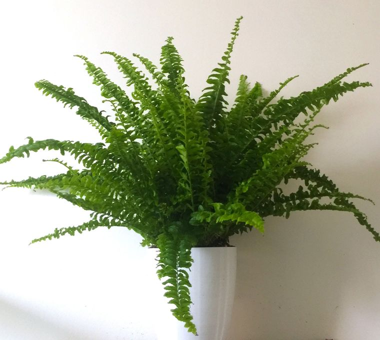 30 Perfect Air Purifying Plants for the Interior of Your Home